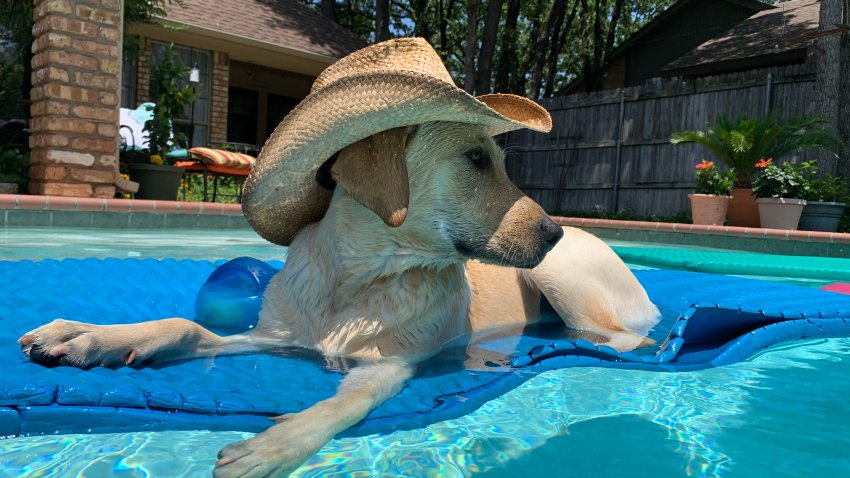[UGCDFW-CJ-dog days] [EXTERNAL] Pet pic