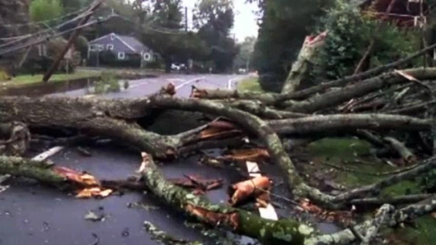 TLMD-arboles-caidos-por-tormentas-ST