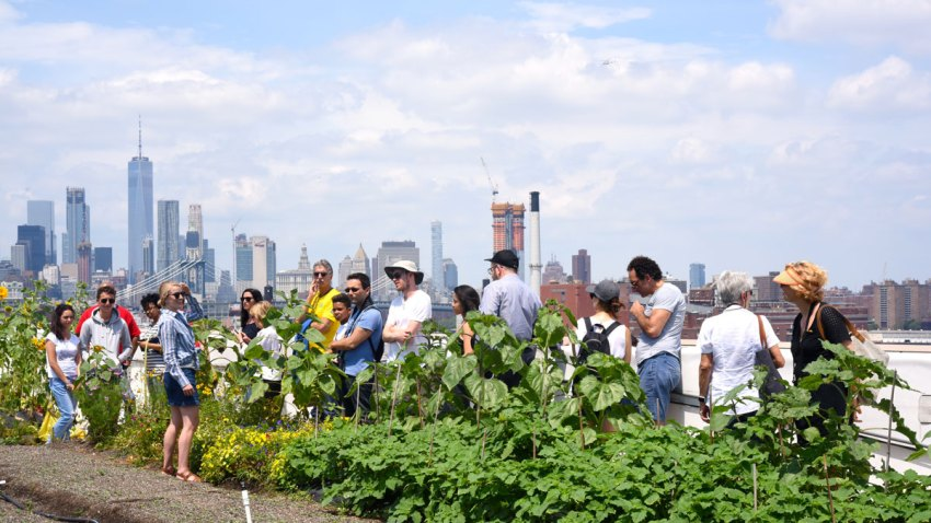 bk-navy-yard-farm-tour
