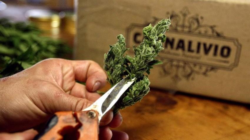 brasil-aprueba-la-venta-de-medicamentos-a-base-de-marihuana