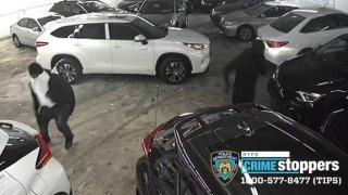 bronx car thieves