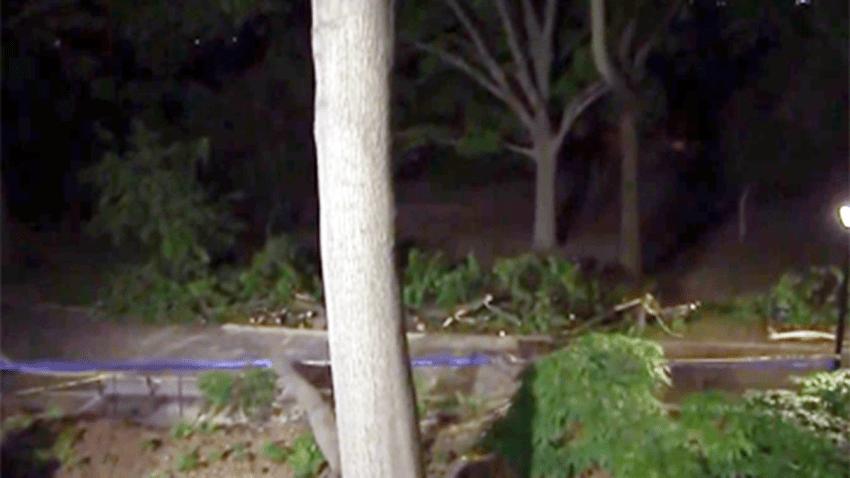 arbol caido en riverside park