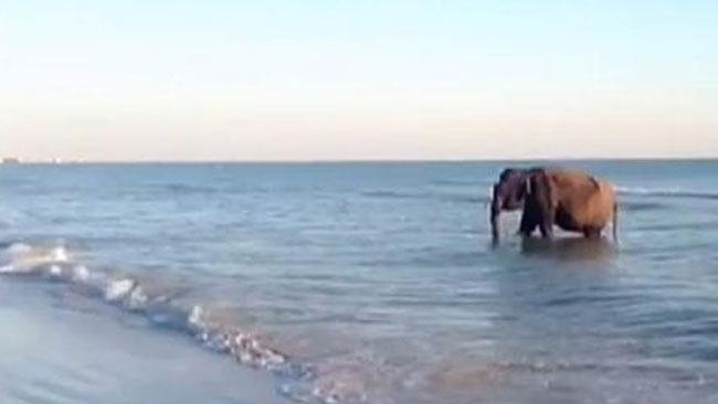 tlmd_elefante_playa_ok