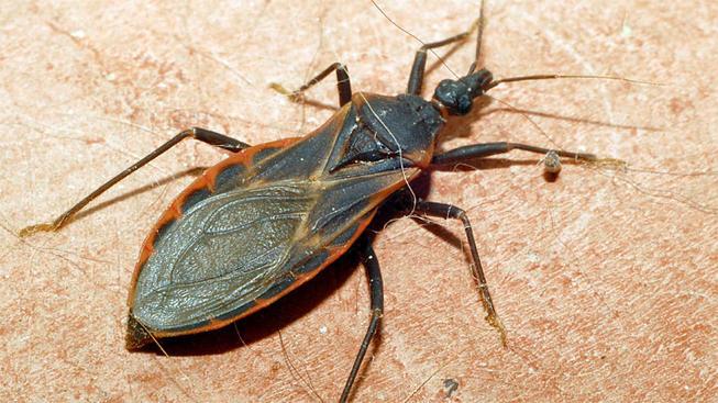 insecto estomacal septiembre 2019