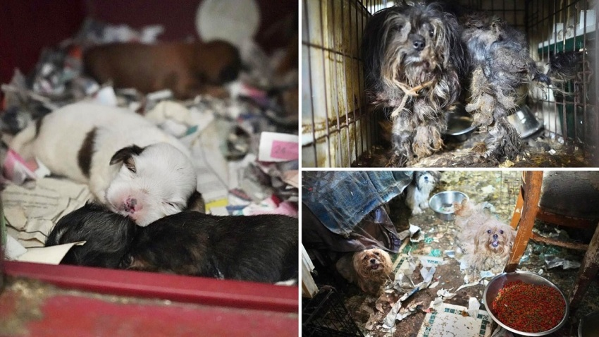 Dozens of dogs found living in squalor in Monmouth County, New Jersey.