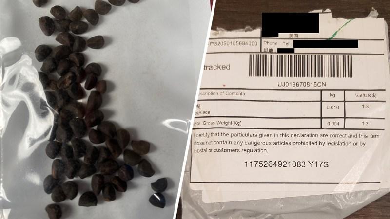 En fotos: así lucen las misteriosas semillas enviadas desde China