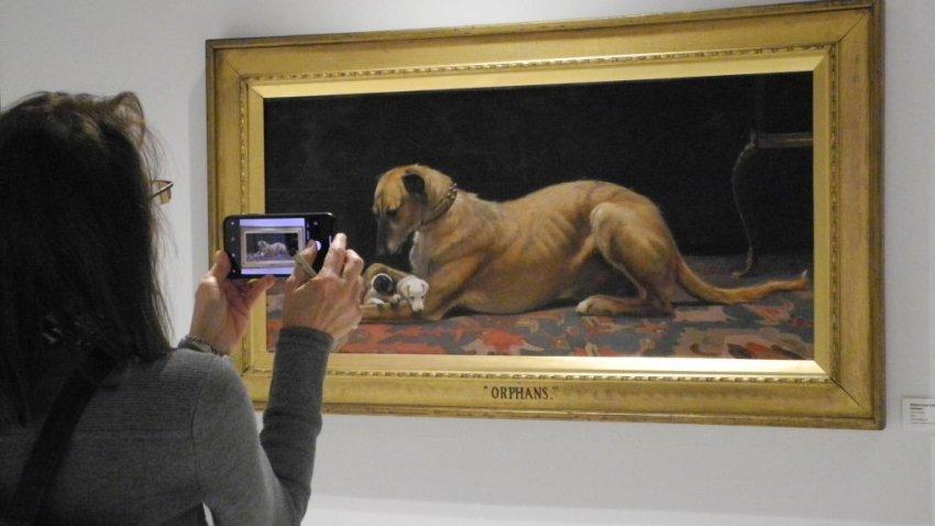 Museo De Nyc Ofrece Exhibición De Pinturas De Todos Los Perros Presidenciales Telemundo New York 47