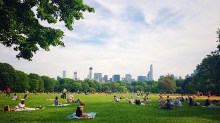 People lounging on the Great Lawn in New York City's Central Park