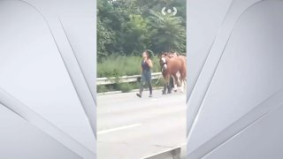 horses on highway