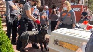 TLMD-rescatan-perros-brooklyn