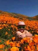 [UGCLA-CJ-weather]Golden Poppy Superbloom