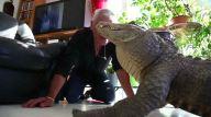 hombre-reptiles-1
