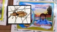CDN: Niña muere tras aplicarle insecticida para los piojos