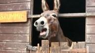 """Aparato promete """"traducir"""" sonidos de los burros"""