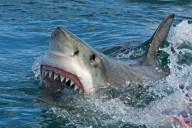 ataque-tiburon-australia-023