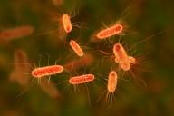 e-coli-que-es-1
