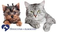 ¡Más de 9,000 mascotas obtienen un nuevo hogar!