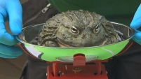 Los empleados del zoológico recopilan información sobre la salud de las criaturas.