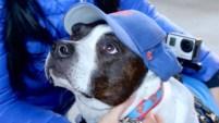 He aquí una recopilación de las fotos que nos han enviado nuestros televidentes de sus mascotas.