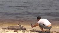 Expertos explican las consecuencias que podría ocasionar una visita a una playa infectada por la marea roja.