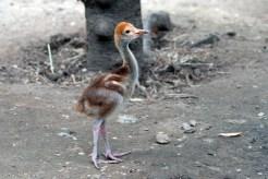 Fotos: Nuevos inquilinos en zoológicos de NY