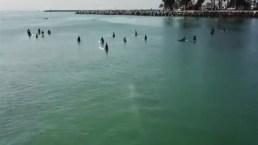 Ballena blanca nada cerca de surfistas en la costa de California
