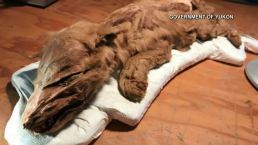 Momias de impacto: 50,000 años conservadas tan intactas que da miedo