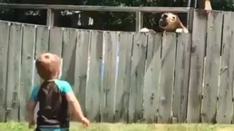 """Viral: """"perrito lanzador"""" brilla jugando a la pelota con su vecino"""
