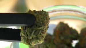 Chula Vista da luz verde a marihuana recreacional