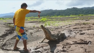 Peligrosa ocupación: joven alimenta a los cocodrilos por el dinero de los turistas