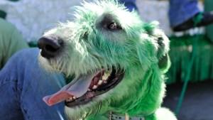 San Patricio: la fiesta que tiñe todo de verde