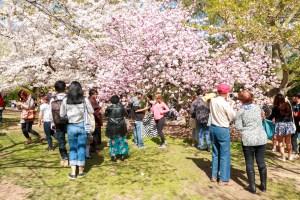 Cosecha tus propios frutos en el Rivers Run Community Garden