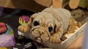 Helados con figuras de cachorros: ¿comerías uno?