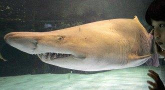 Fotos: El tiburón y su temida presencia en el mar
