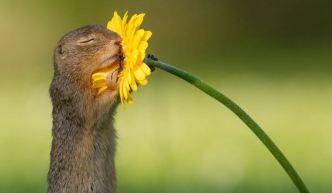 La verdad tras la foto viral de una ardilla y la  flor