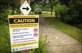 Prohiben acceso a 7 lagos y estanques en RI por algas tóxicas