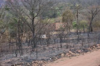 Incendios forestales dañan miles de hectáreas en Bolivia