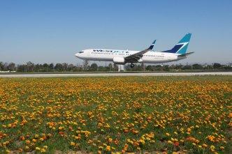 Flores también aparecen en Aeropuerto de Los Ángeles