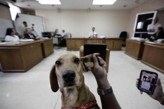 """Campeón, primer perro que """"testificó"""" en juicio por maltrato"""
