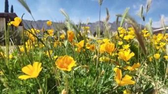 Regresa a El Paso el impactante festival de las flores