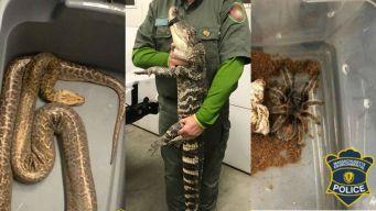 Arrestan hombre de Rhode Island con animales exóticos