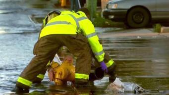 Buscan a conductor que chocó con hidrante y huyó