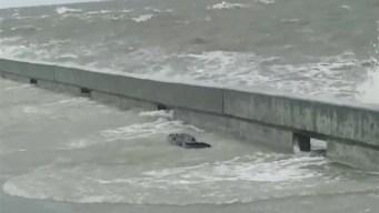 En video: caimán aparece en costa de Misisipi durante la tormenta tropical Barry
