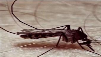 Confirman caso humano del virus del Nilo Occidental