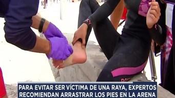 Evita ser atacado por una raya redonda de California en la playa