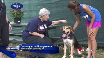 Familias y mascotas felices en Desocupar Los Albergues
