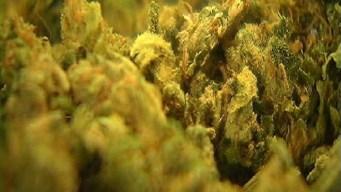 Tras un mes de la legalización de marihuana recreativa