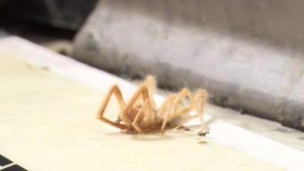 Los riesgos que representan los insectos en el verano