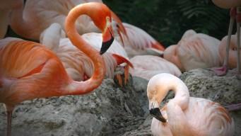 Zoológico celebra el amor de Lance Bass y Freddie Mercury, pareja de flamencos gay