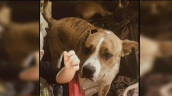 Oficiales matan a perros a disparos tras presunto ataque